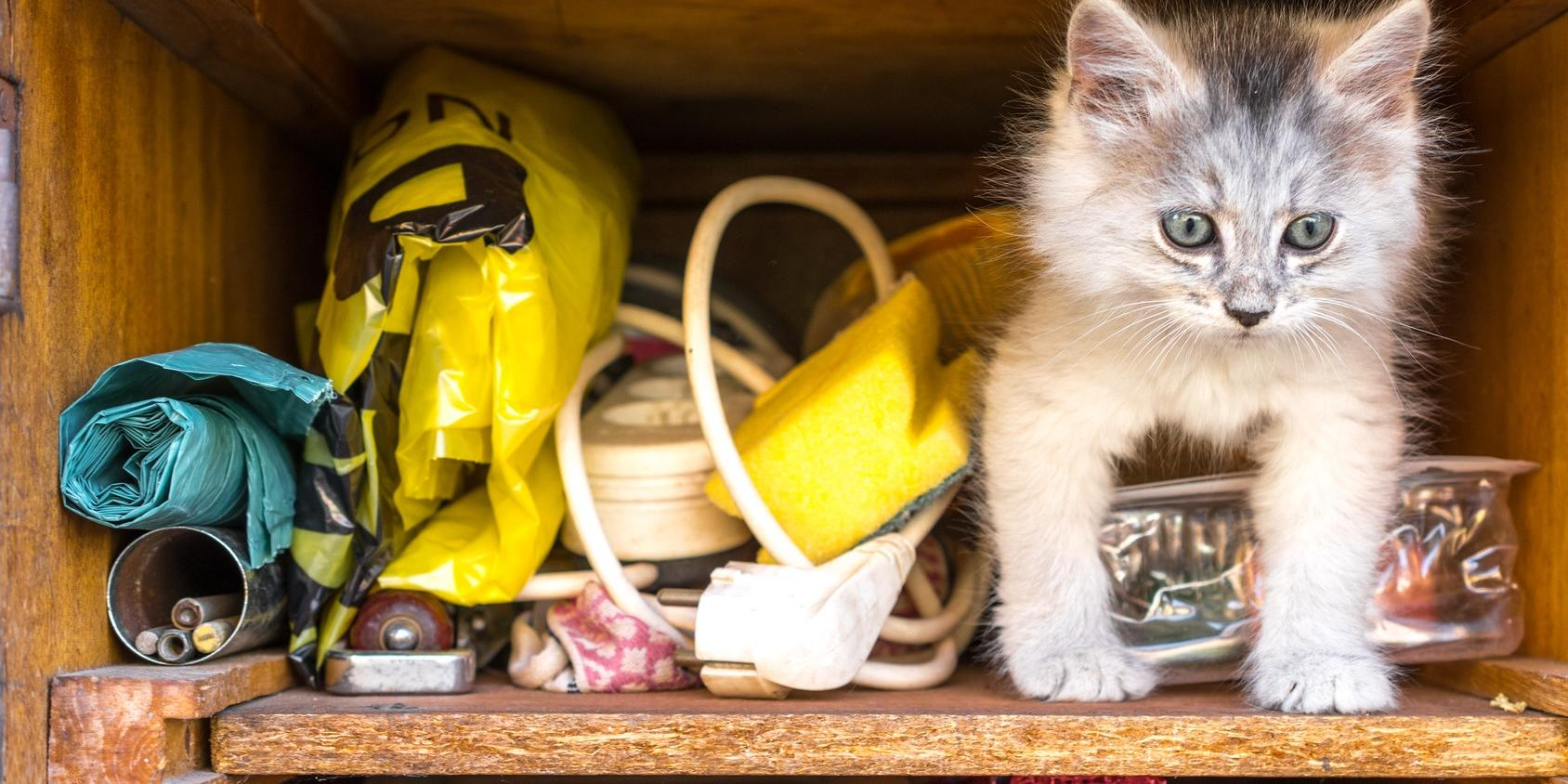 Schublade mit Katze und Kleinkram